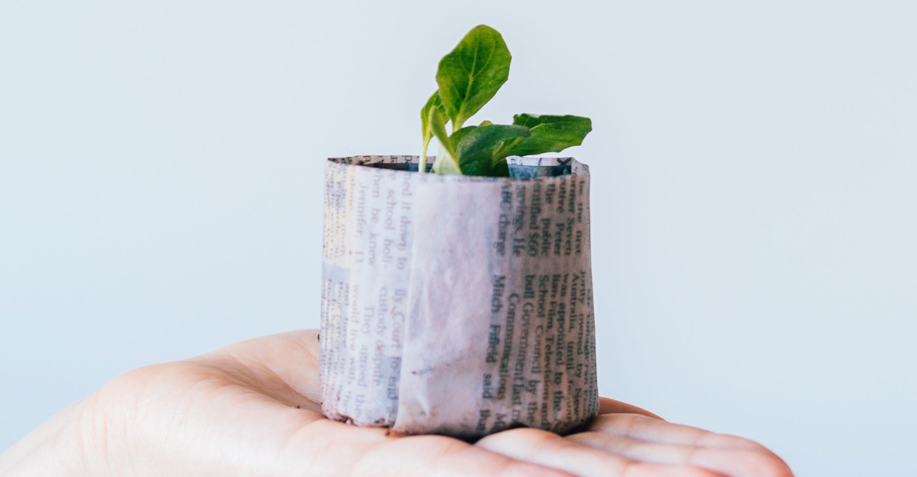 diccionario para ser más sostenible